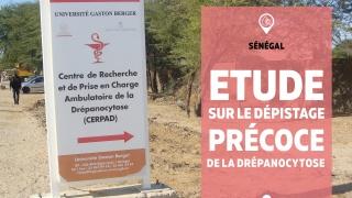 Sénégal – Drépanocytose : des avancées concrètes pour l'étude sur le dépistage précoce